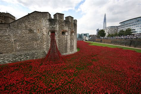 Tower of London poppies: eBay launches crackdown on users