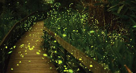 Our tip: Spotting Fireflies in Bangkok - Bamboo Bicycle